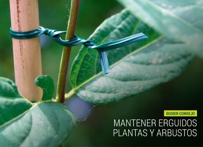 Mantener erguidos plantas y arbustos nortene nortene for Plantas y arbustos de exterior