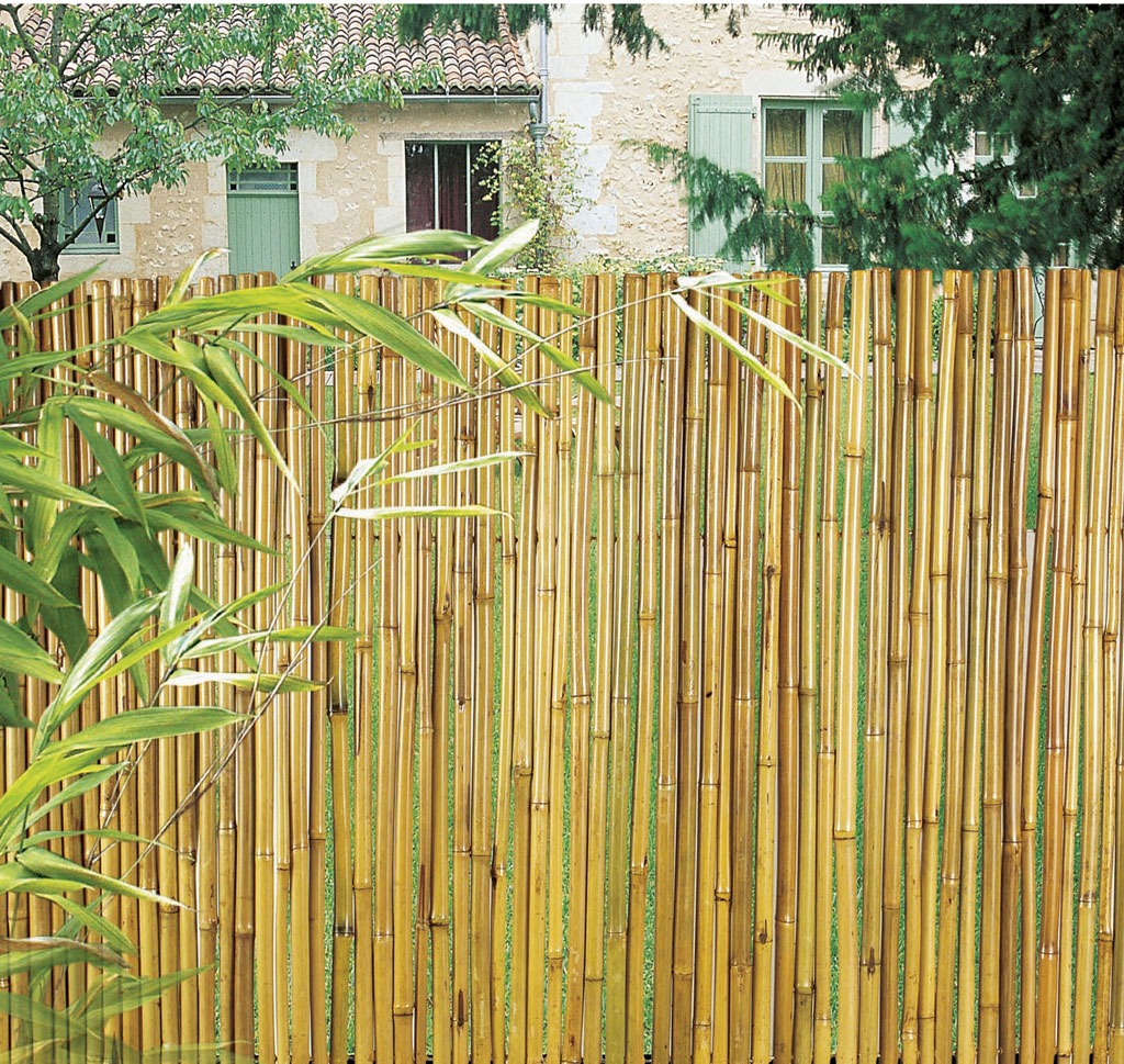 Bamb Barnizado Nortene ~ Cañas De Bambu Verdes Para Decorar
