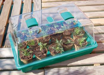 Rapid grow mini invernadero con ventilaci n nortene - Mini invernadero casero ...